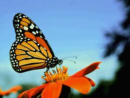 """A """"vivid"""" butterfly"""